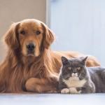 Pályázati felhívás kutya, macska ivartalanítására